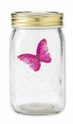 Schmetterling im Glas fliegender Pinker Morpho Falter