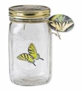 Schmetterling im Glas fliegender Schwalbenschwanz